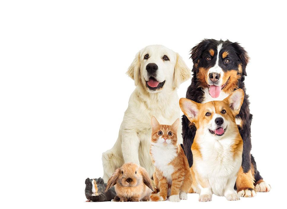 accroche-veterinairelacremans-liege