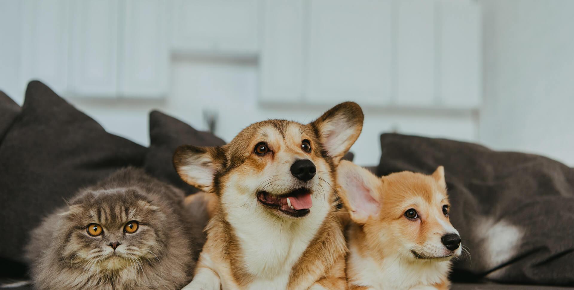 background-veterinaire-veterinairelacremans-liege