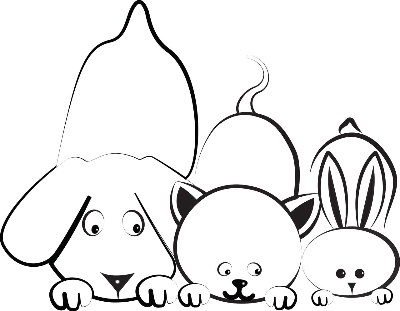 commandes-veterinairelacremans-liege