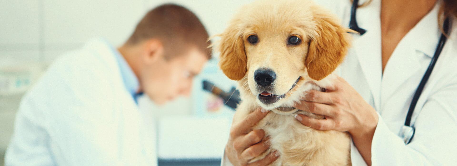 slider02-veterinairelacremans-liege (1)