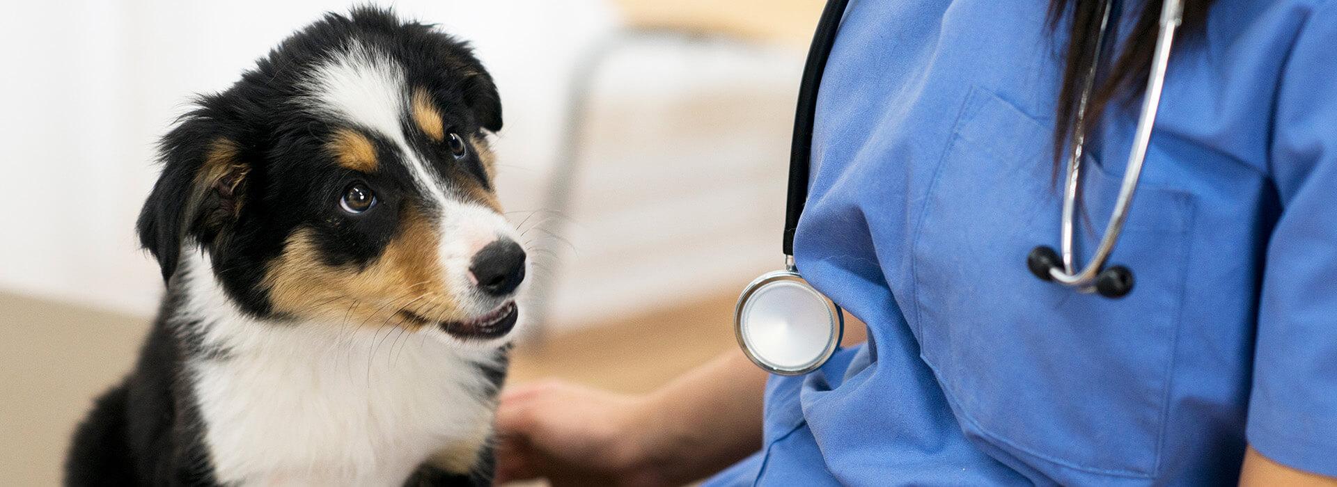 slider2-veterinairelacremans-liege (1)